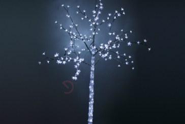 Dalsher – Alberi luminosi
