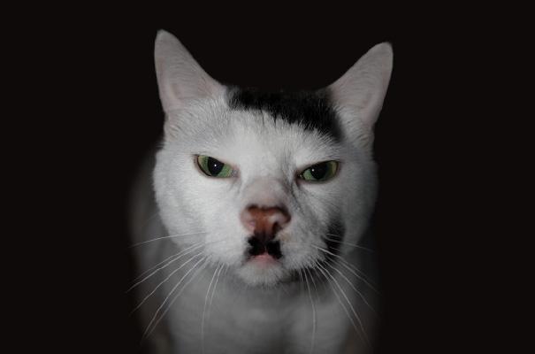 I gattini colpiscono ancora