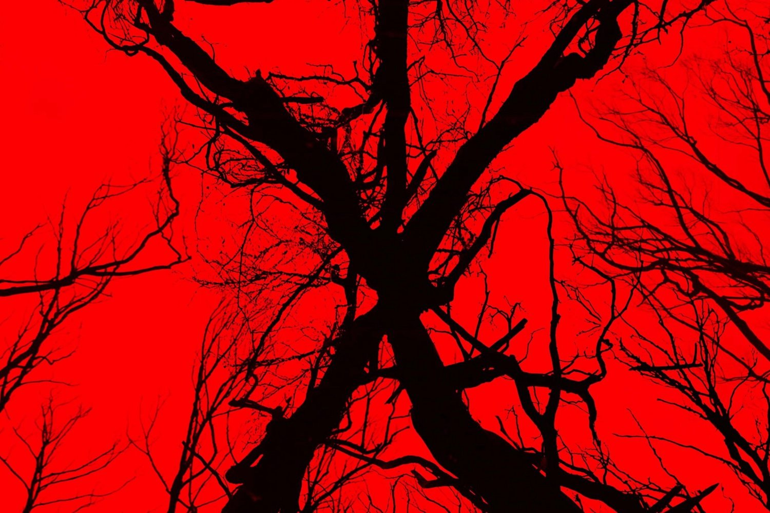 Blair Witch - Recensione