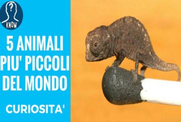 Gli animali più piccoli del mondo