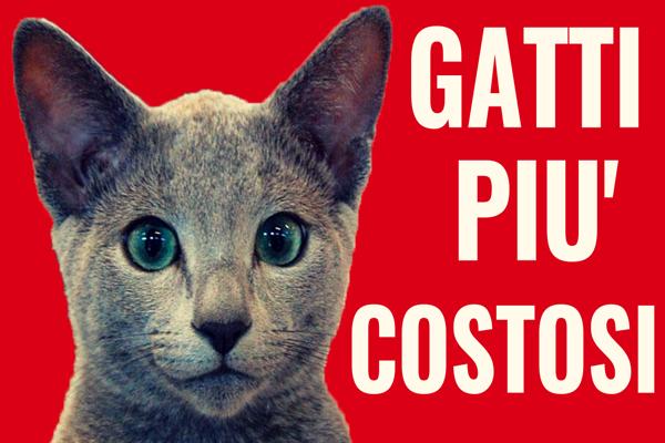 I gatti più costosi al mondo