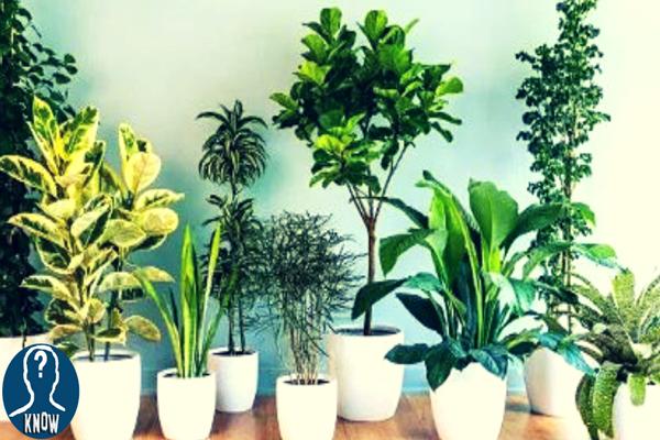 Le migliori piante da appartamento per purificare l'aria
