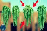 Le migliori piante grasse da appartamento