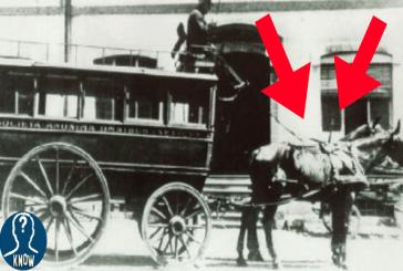 Il primo trasporto pubblico in Italia